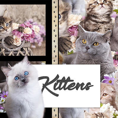 Category Image Cute Kittens