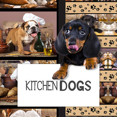 Category Image Kitchen Dogs